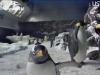 Penguin Cam 1 - San Diego