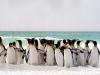 penguins_on_the_beach