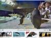 Penguin Cam  - San Diego