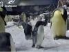 Penguin Cam 3 - San Diego