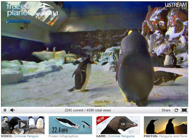 Penguin Cam - SeaWorld San Diego